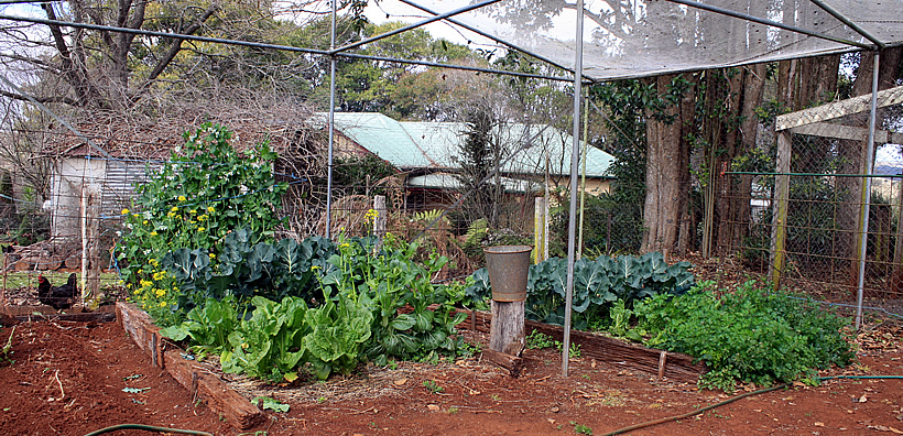 mossgrove vegetable garden-02